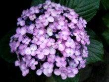 成就院-紫