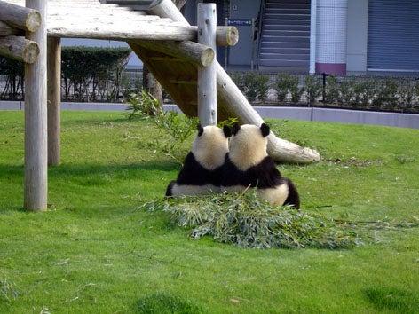 傘が無かけん外に行かれん…-0901パンダ