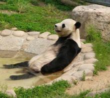パンダだって癒されたい