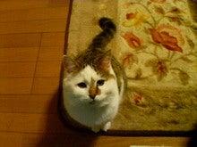 猫に仁義 怪獣に小判-090122_2226~01.jpg