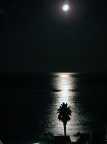 月と海とヤシの木と