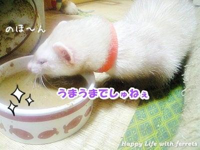 はっぴーらいふ with ferrets-喪中にて⑪