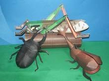 eーpark昆虫