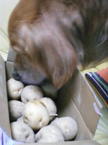 ラッキーも大好きなジャガイモ!(^^)! 嬉し~い♪