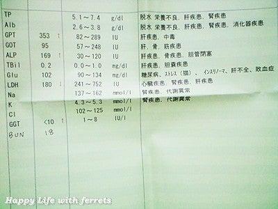 血液検査の結果②