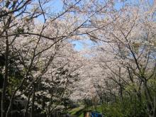 """桜06""""4"""