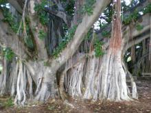 ガンジーを見守る木々