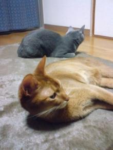 たかが猫 されど猫-君達、此処にしか居ないね最近(笑)