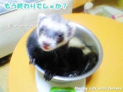 はっぴーらいふ with ferrets-体重チェック⑥