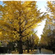 【東京早上去】光之丘…