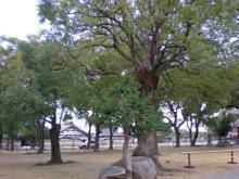 境内の木々
