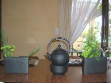 1月中国茶花