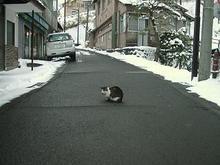 青根温泉の猫-1