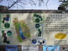 鶴田沼緑地4