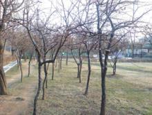 オーブラ公園3