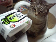 スス♀+ぶー♂ログ ~黒猫とアメショMIX+その下僕~ -MA320391.JPG