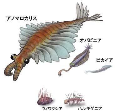 カンブリア 紀 生物