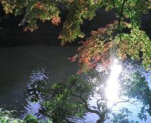 小石川庭園2