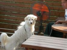 扇風機の風にあたって自分で乾かしてる^^;