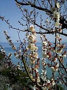 博多ホメホメ新聞-090215_1246~0001.jpg