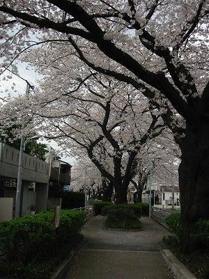 呑川緑道(深沢~都立大学)