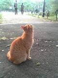 日比谷公園の野良猫