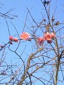 ~Junkoro Songbird♪~-090220_165337.JPG