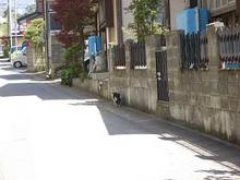 山形の猫さん-1