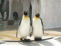 ペンギン★