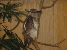 BIRD PARADISE-017