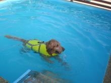 ラッキーは1時間 泳ぎっぱなしでしたョ
