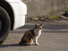 宮城県の猫さん-6