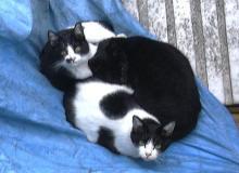 三匹猫まんじゅう