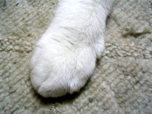 猫 ペット 画像