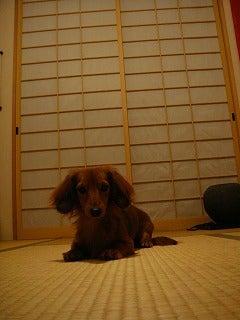 旅犬Laniのほほん風船記-障子の張り替え