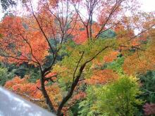 山口の紅葉