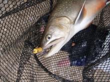 Fishing Blog OFFSHORE CRAZY! ~ 夢は一発大物!   鮪だ!鰤だ!大政だ!巨カンパだ!大鯛だ!なんでもこ~い!-ぶるっく