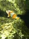 サンシャイン 魚9.JPG