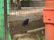 '05夏・仙台の猫-2
