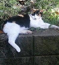 神宮の片隅猫