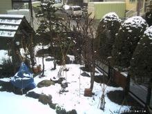 4月半ばの庭先