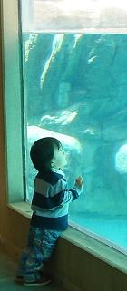 水族館じゃありません