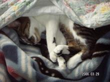 隠れて寝てるの。見にゃいで!