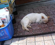 中野新橋は猫の街だった。