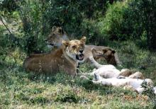 徳島の矯正歯科専門医院-ライオン