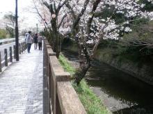 郷瀬川沿いの桜並木
