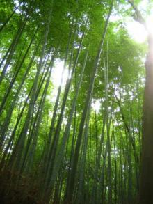 竹林(大河内山荘付近)