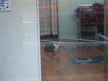 床屋さん猫-1