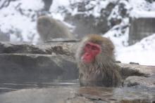 お猿の温泉