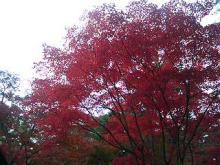 YAMA WARS  -the HAKONEYAMA--紅葉1